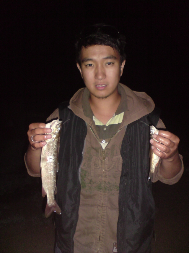 siberian lenok family trout and chapak from Mongolian river