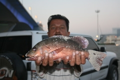 Red Snapper in Dubai, Garhoud