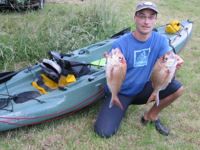 two snapper taken in the Firth of Thames, NZ
