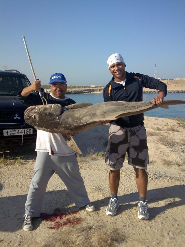 Cobia caught at Gantoot AbuDhabi boarder