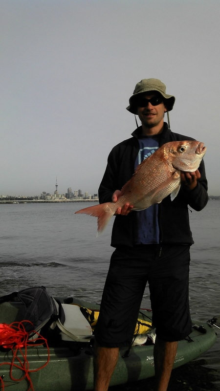 60 cm Auckland Snapper