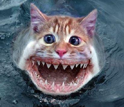 Mean Catfish