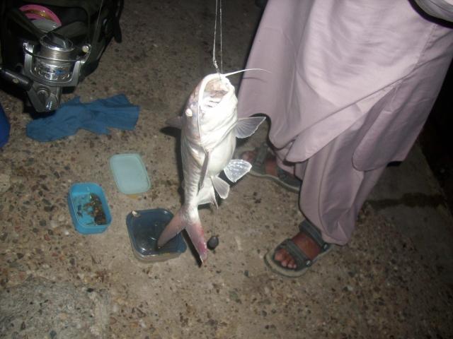 Big (Cat fish) caught.