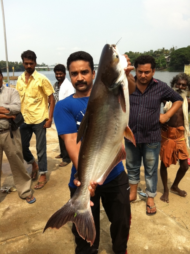 22 POUND GIANT MEKONG CATFISH CAUGHT AT ALUVA PERIYAR, COCHIN,INDIA.