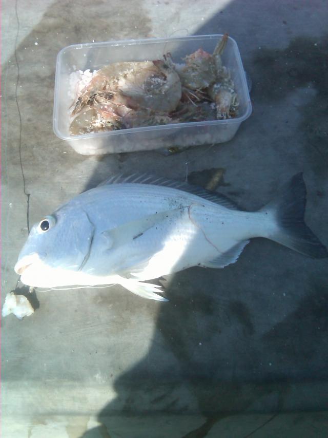 My 2nd catch