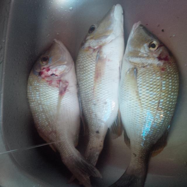 Valentine's Day fishing in Corniche