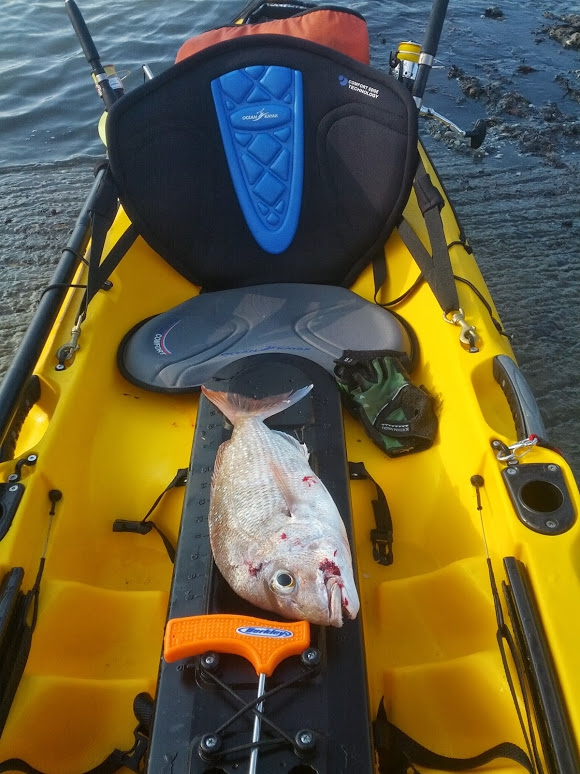 First snapper on my new prowler 4.1 ultra