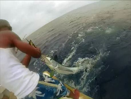 Roatan Anglers Catch and Released