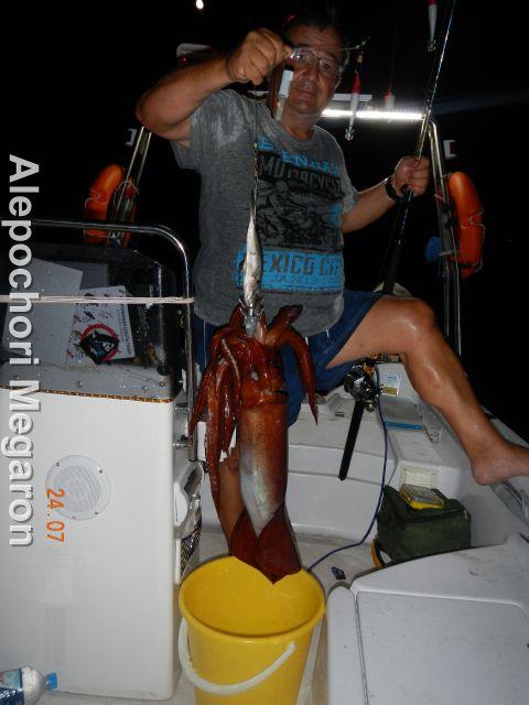 squid at alepochori