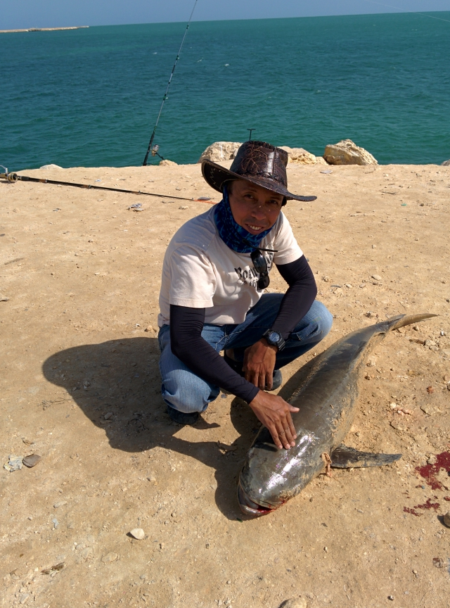 Another cobia from Al Khor...