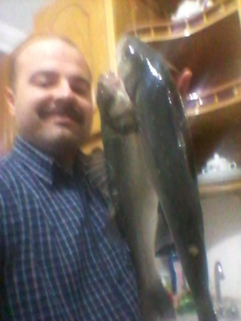 SeaBass on Hook,in RizeCity Turkey