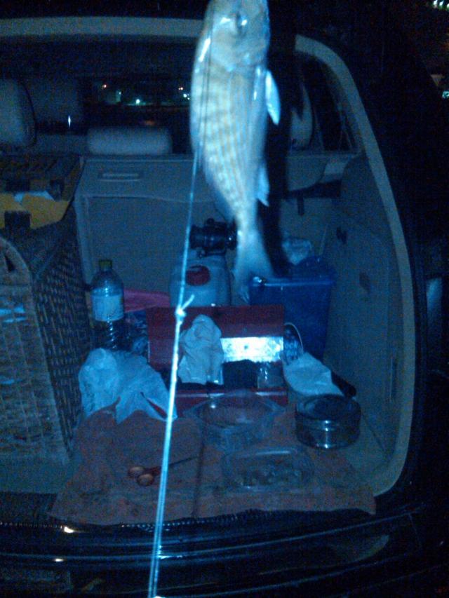 Night Fishing01