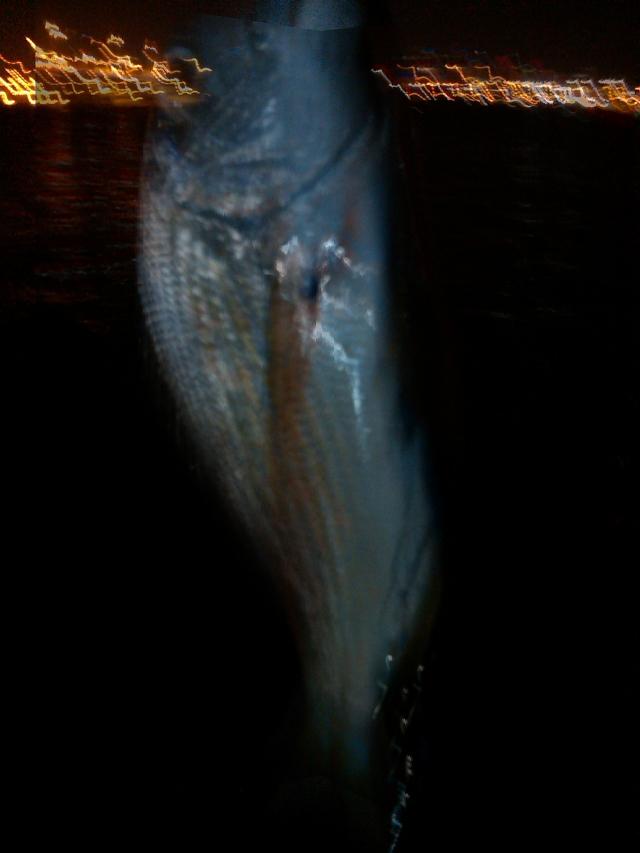 night fishing2