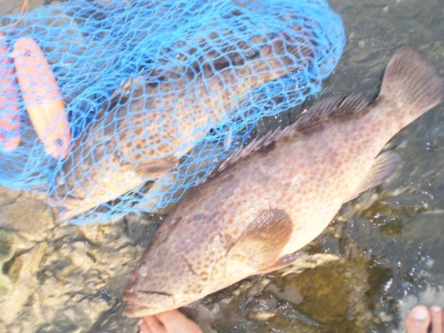 MARINA MALL BREAKWATER FISHING 12JUNE2015