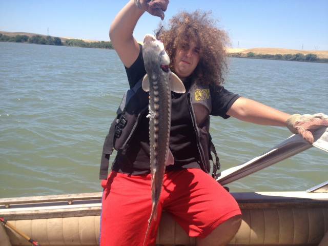 First sturgeon. Only 33 inches had to let go