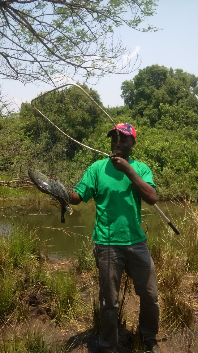 Scooping season for common bream