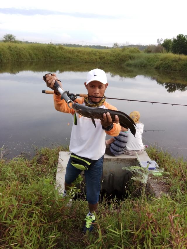Snakehead attack