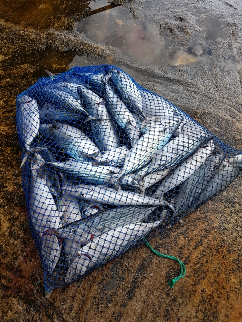Mixed bag bonito mac tuna