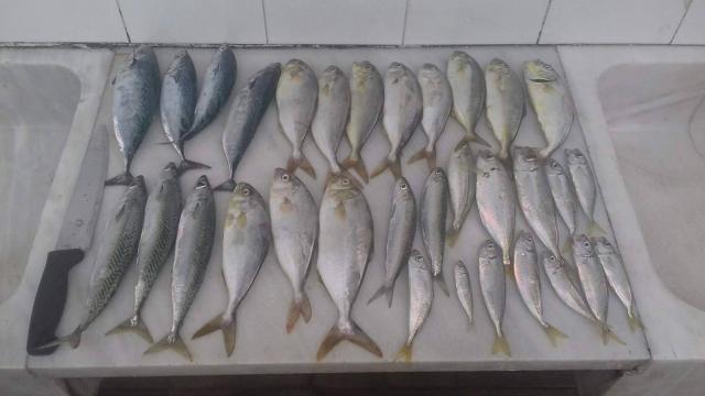 Kolios,Tunaki,Manali,Sardeli,Safridi