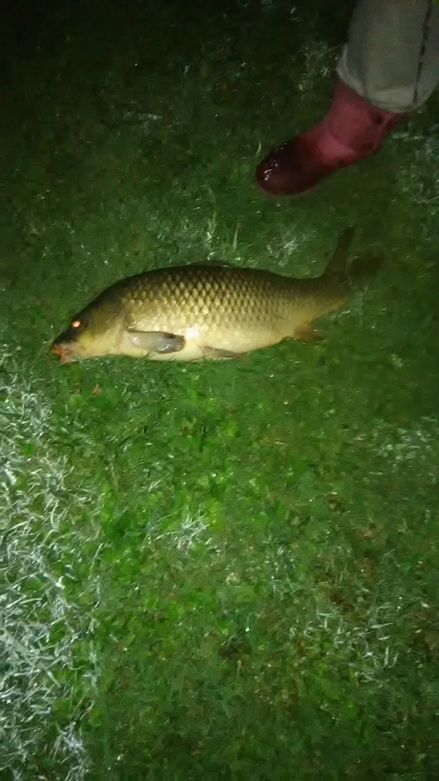 Biggest carp I've caught so far