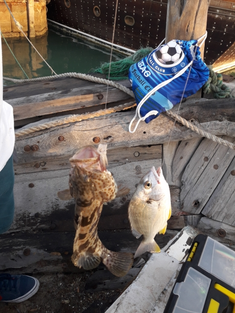 Al Khor Dock Fishing