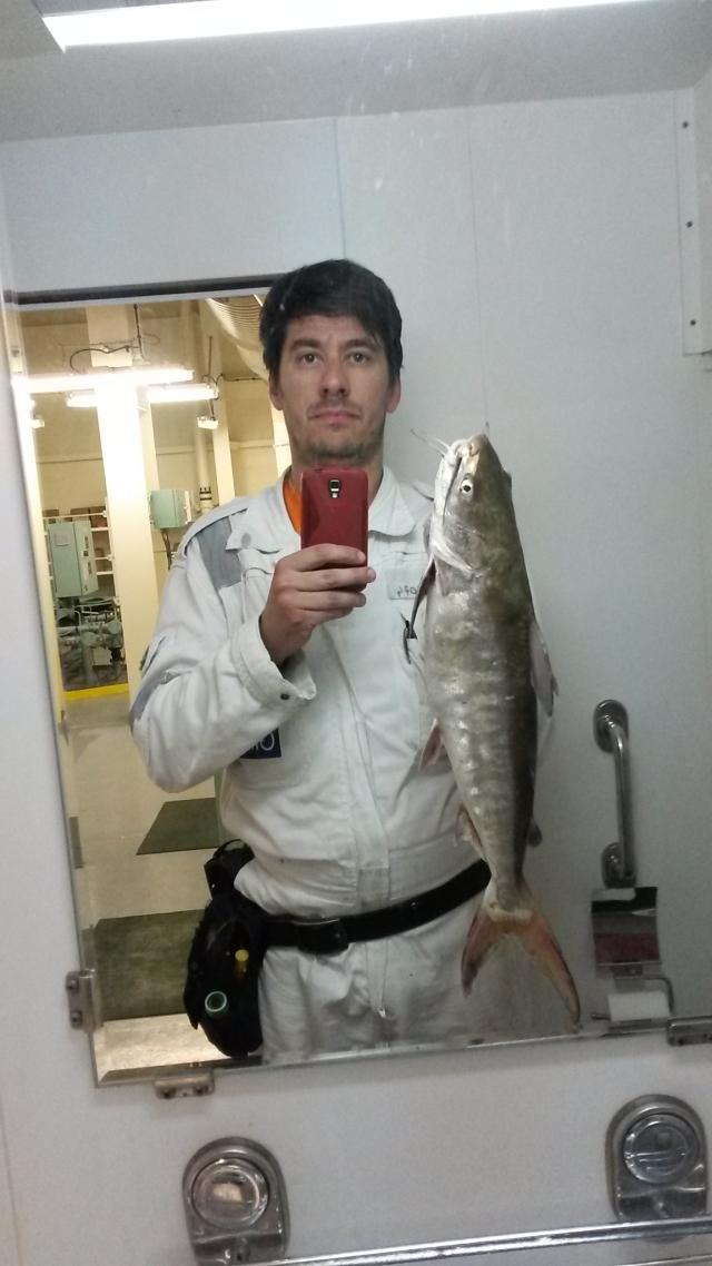 Catfish, 2.5Kg