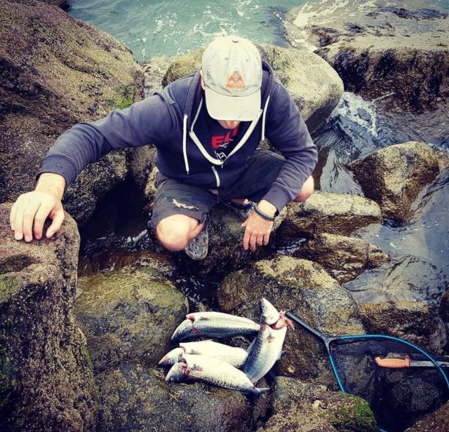 Early morning Kahawai / Australian Salmon Catch