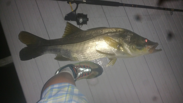 snookie mcfat fat on the dock