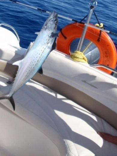 Fishing Turks and caicos islands