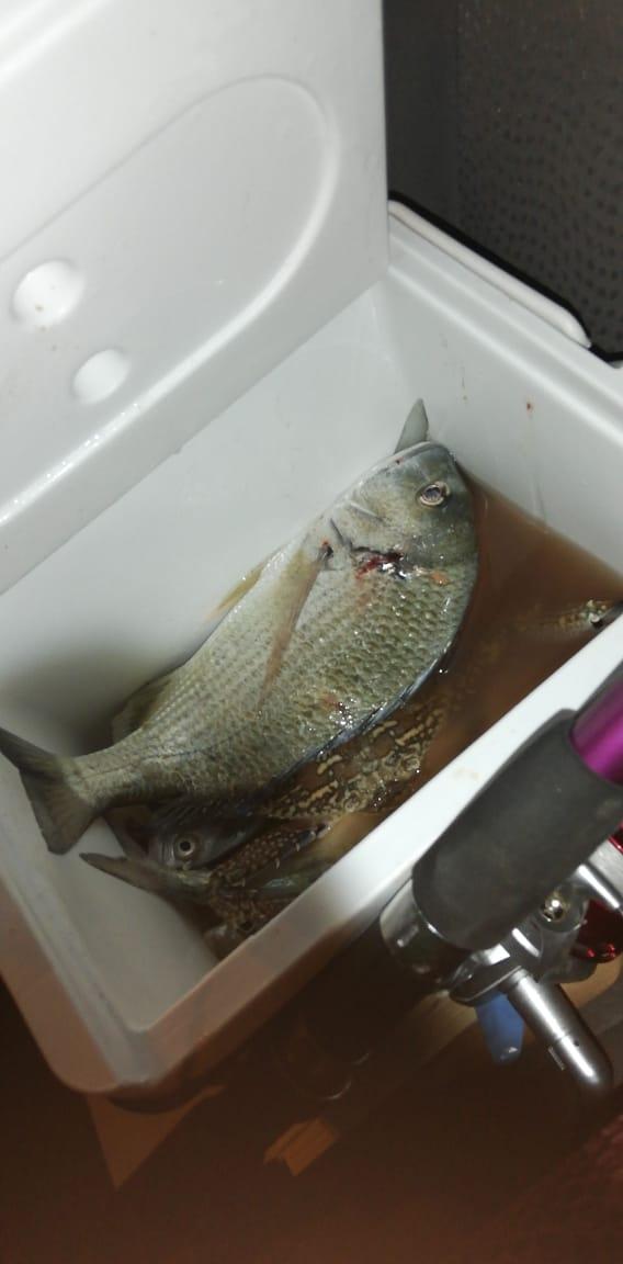 We catch fish & crab