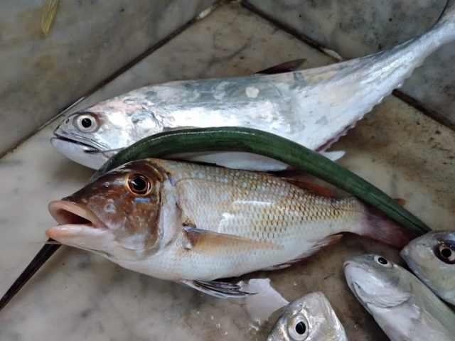 sharry fish
