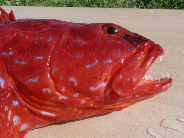 Harlequin fish.