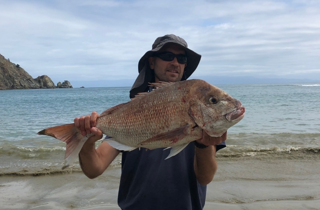 11 pound snapper  - put up a hell of a fight