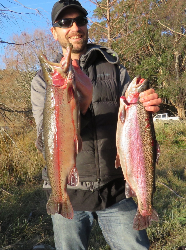 Awesome condition rainbow trout from lake Argyle
