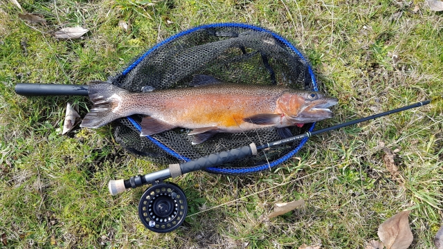 My first rainbow trout properly landed on a fly rod