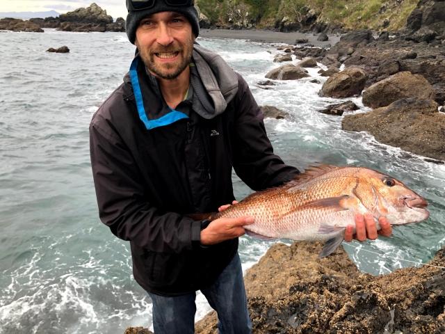 good sized snapper - rock fishing coromandel