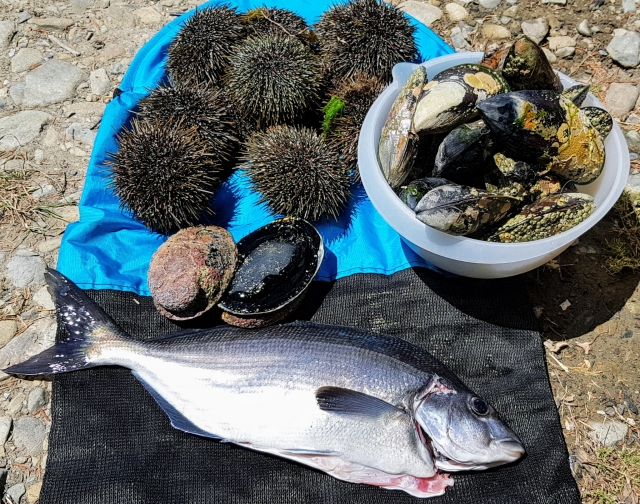Nice bag of seafood. Sea urchins, abalones, blue moki