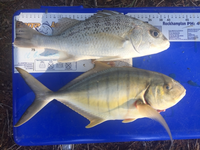 Grunter and golden trevally