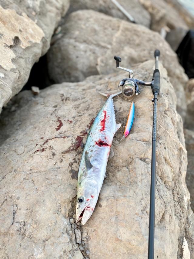King Mackerel #AbuDhabifishing