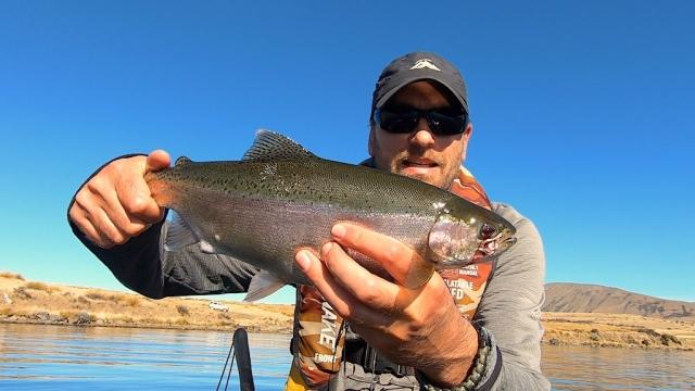 Little Rainbow trout out of Lake Heron (Ashburton Lakes)