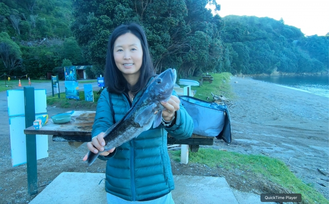 Blue cod pandemic, every cast brings a blue cod  in Marlborough, New Zealand
