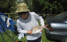 Small Pannie Snapper