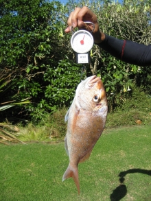 weighing a fish