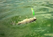 Lake Baroon Maleny QLD Australia