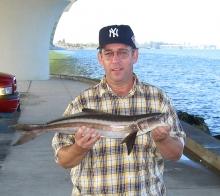 Tom's Cobia-Hart's Landing Sarasota