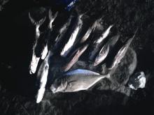 Ras Al Khaimah Fishing