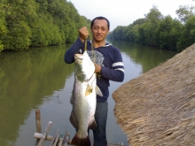 Indonesian Baramundi