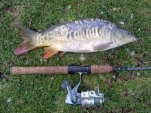 1st carp in many years