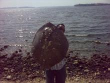 the stingray 22 kg