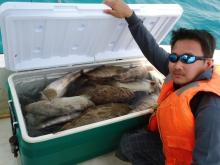 trolling/abu dhabi fishing